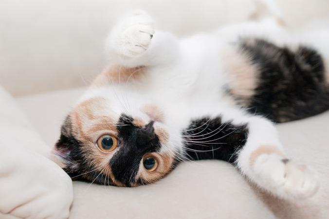 cat-649164_1920
