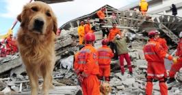 Destacada-perro-de-rescate