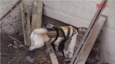 frida-perra-rescatador